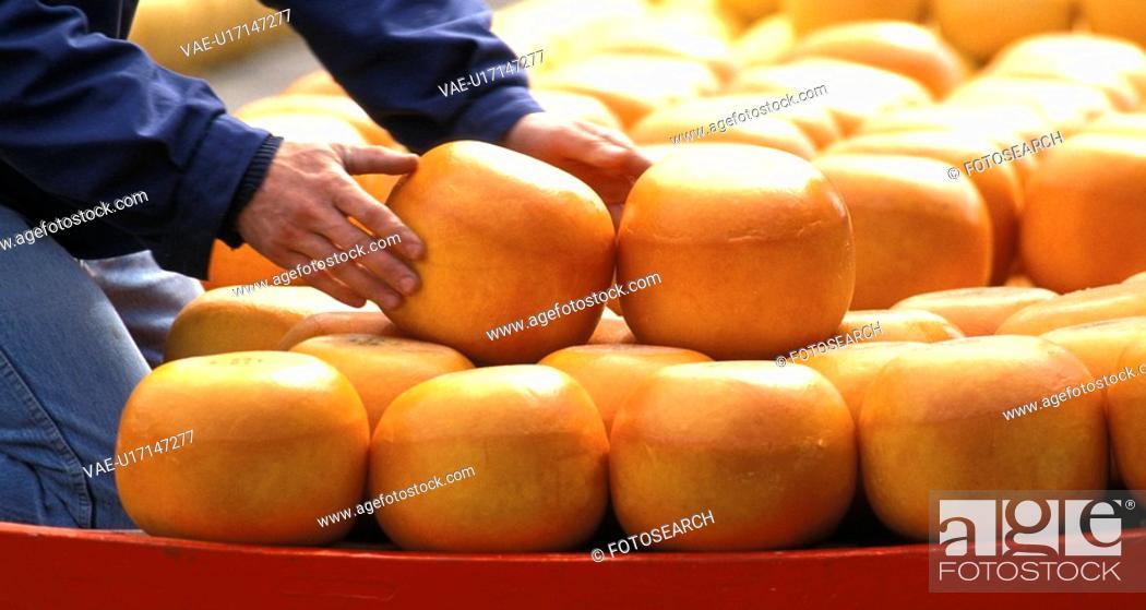 Stock Photo: edam, calf, cheese stacker, cheese loaf, cheese, farmer, alkmaar.