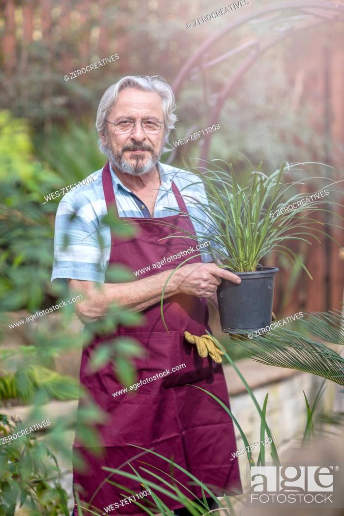 Stock Photo: Elderly gardener working in garden centre holding a plant.