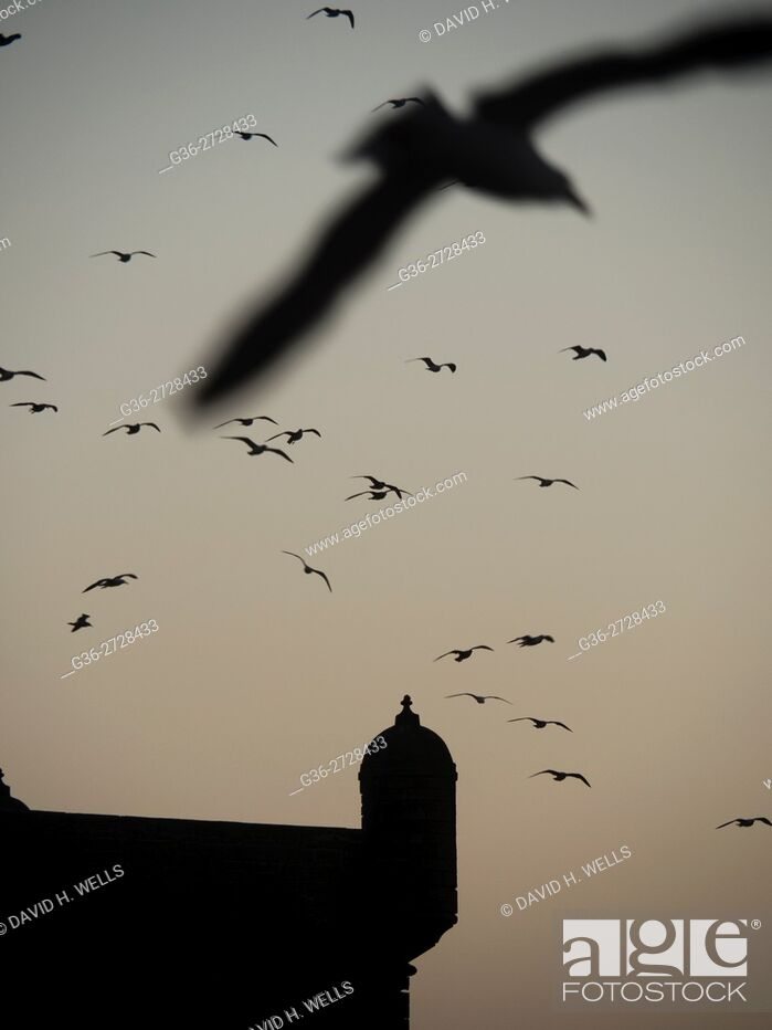 Stock Photo: Flock of birds in sky, Essaouira, Morocco.