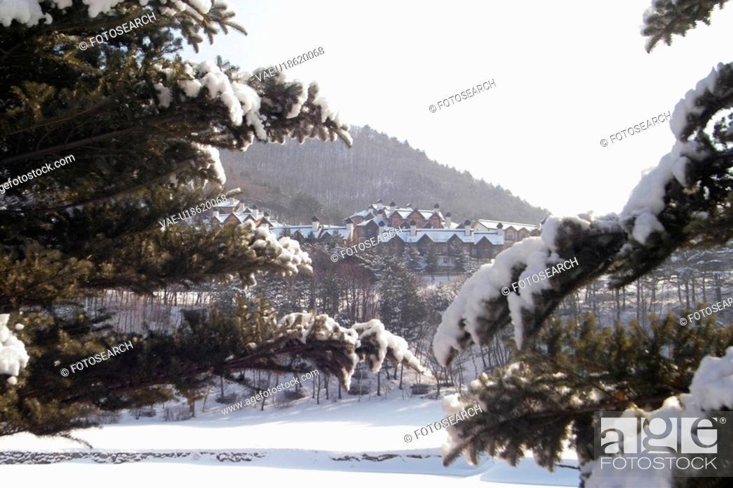 Stock Photo: snowscape, snow, landscape, winter, mountain, scenery, tree.