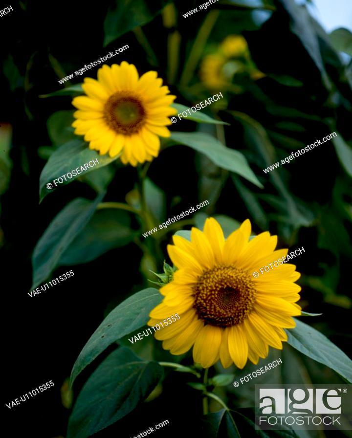 Stock Photo: flowers, nature, flower, closeup, scene, yellow flower, landscape.