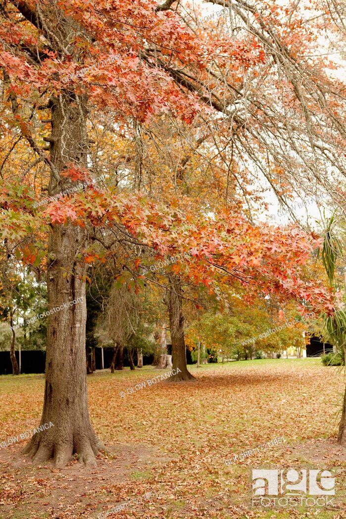 Stock Photo: Autumn trees in a garden.