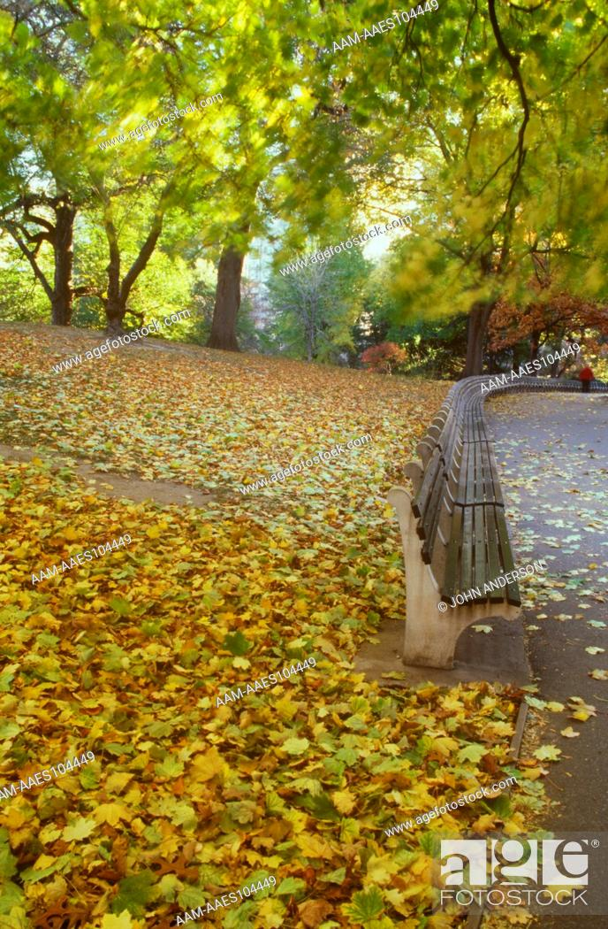Central Park New York City Park Bench In Fall Stock Photo