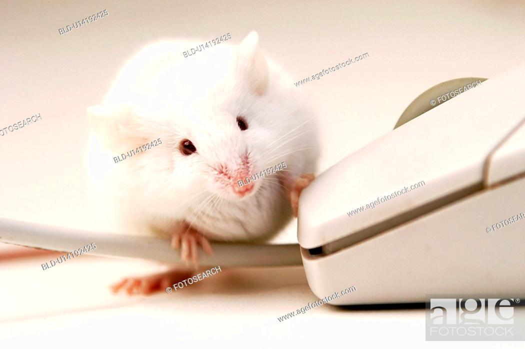 Stock Photo: rechner, alfred, animals, cable, CLOSE.