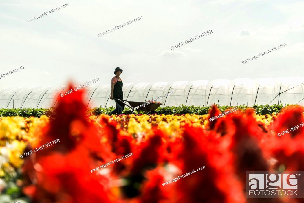 Stock Photo: Woman pushing wheelbarrow at a nursery.