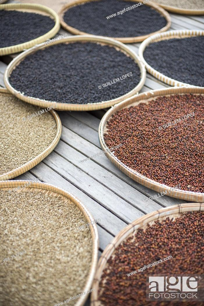 Stock Photo: Colorful display of dried up fresh peppercorns, Kampot, Cambodia.