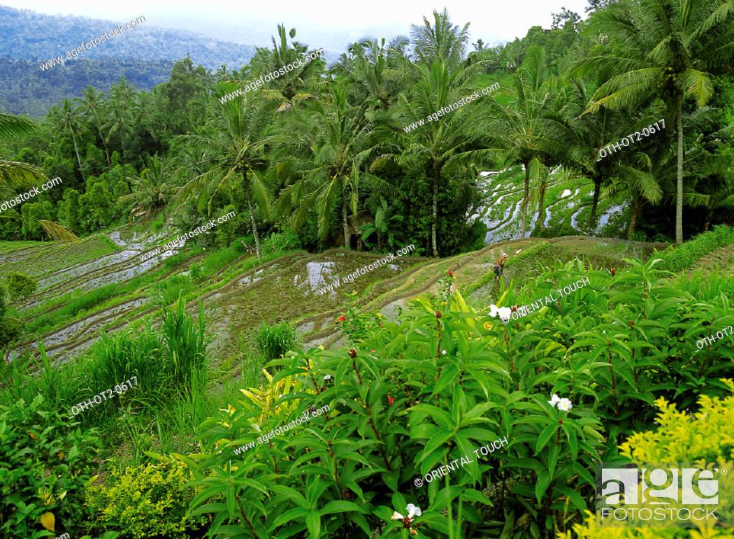 Imagen: Rice Terrace Batunya, Indonesia.