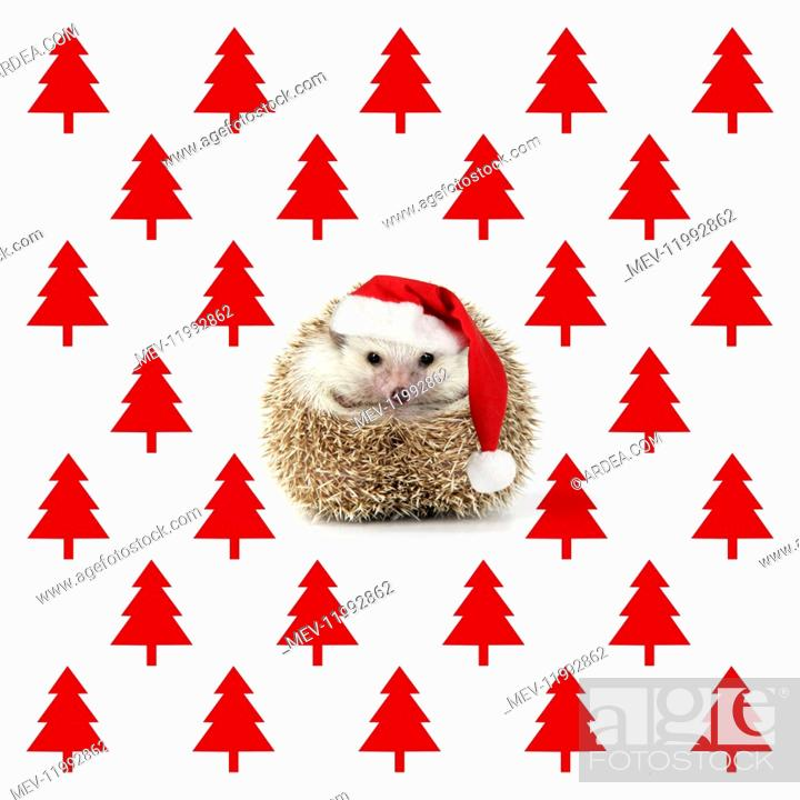 Stock Photo: Hedgehog wearing Christmas hat with Christmas tree background.