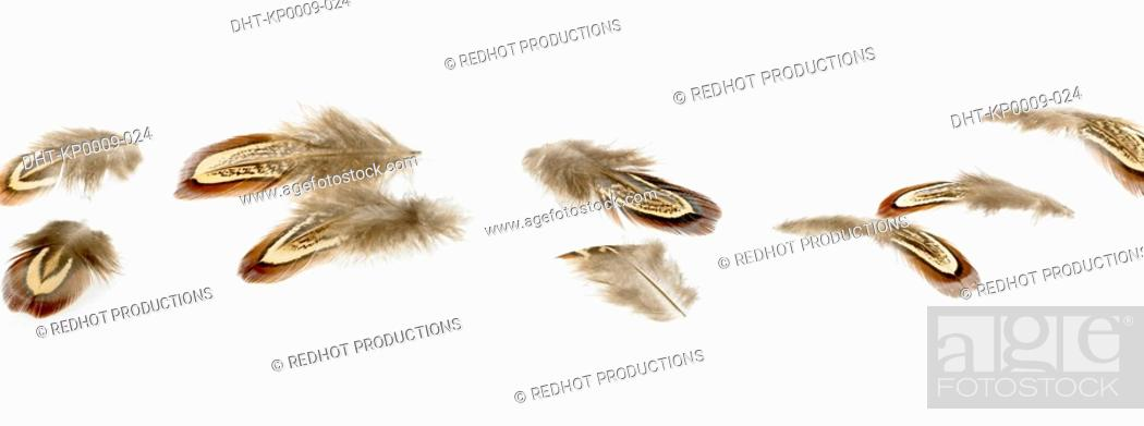 Stock Photo: Scattered brown Feathers.