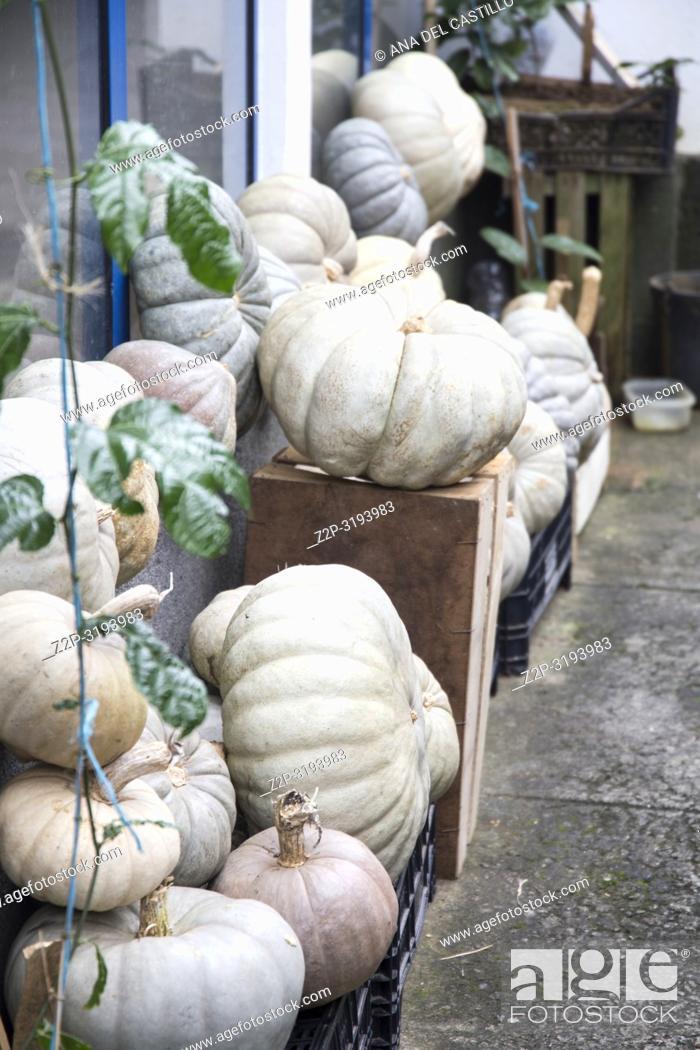 Stock Photo: Pumpkins at Angra market Terceira island Azores Portugal.