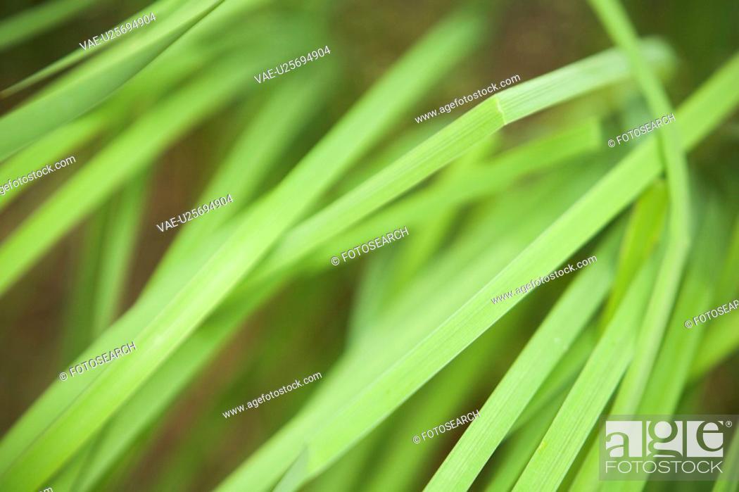 Stock Photo: Botany, Close-Up, Design, Detail, Environment.