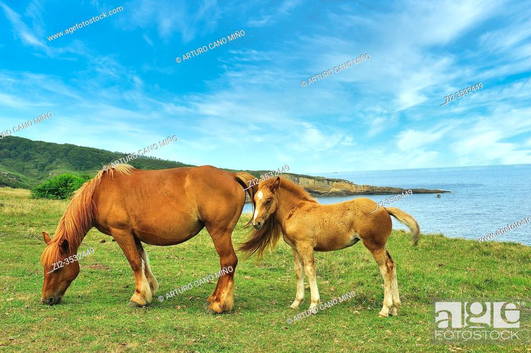 Imagen: Horses in the Basque coast. Hondarribia town, Guipuzcoa province, Spain.