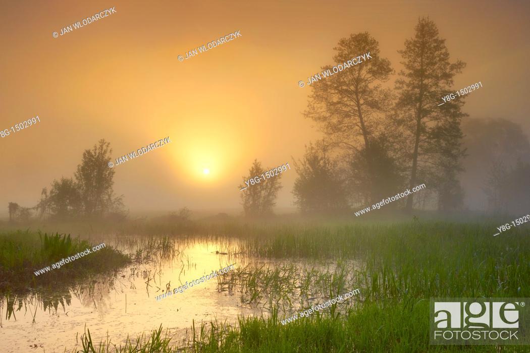 Stock Photo: Sunrise, Narew National Park, Poland, Europe.
