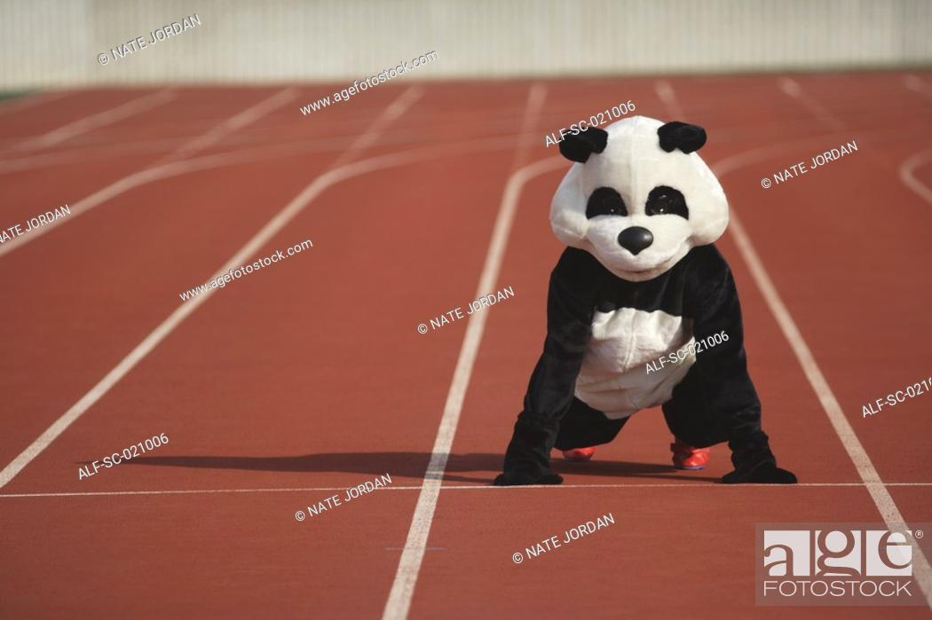 Stock Photo: Panda Crouching on a Track.