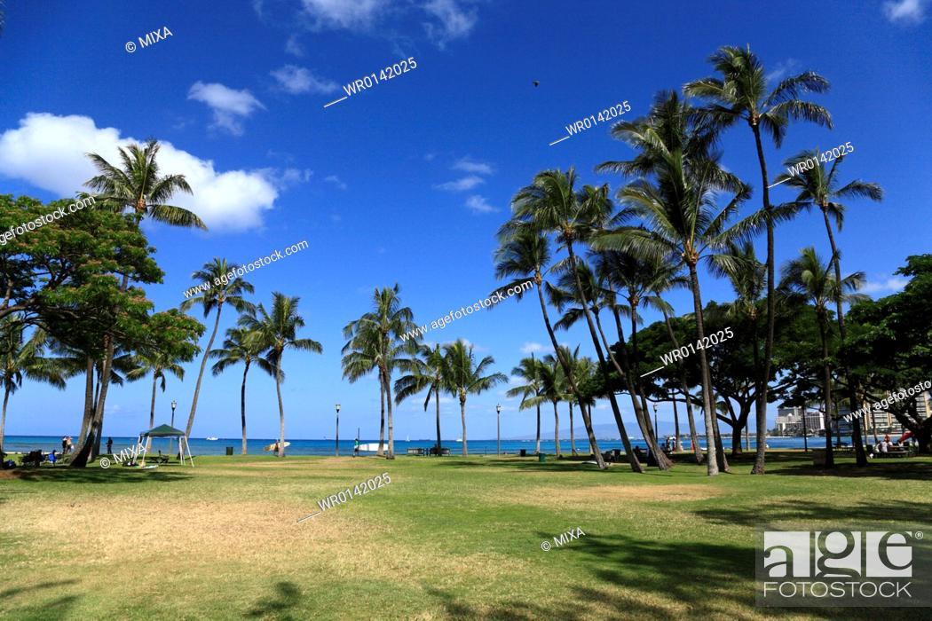 Stock Photo: Palm Tree, Honolulu, Hawaii, U.S.A.