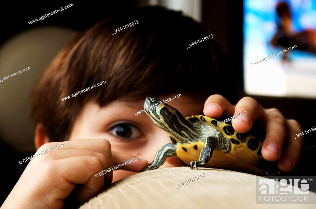 Stock Photo: Seven years old boy playing with a domestic turtle at home.