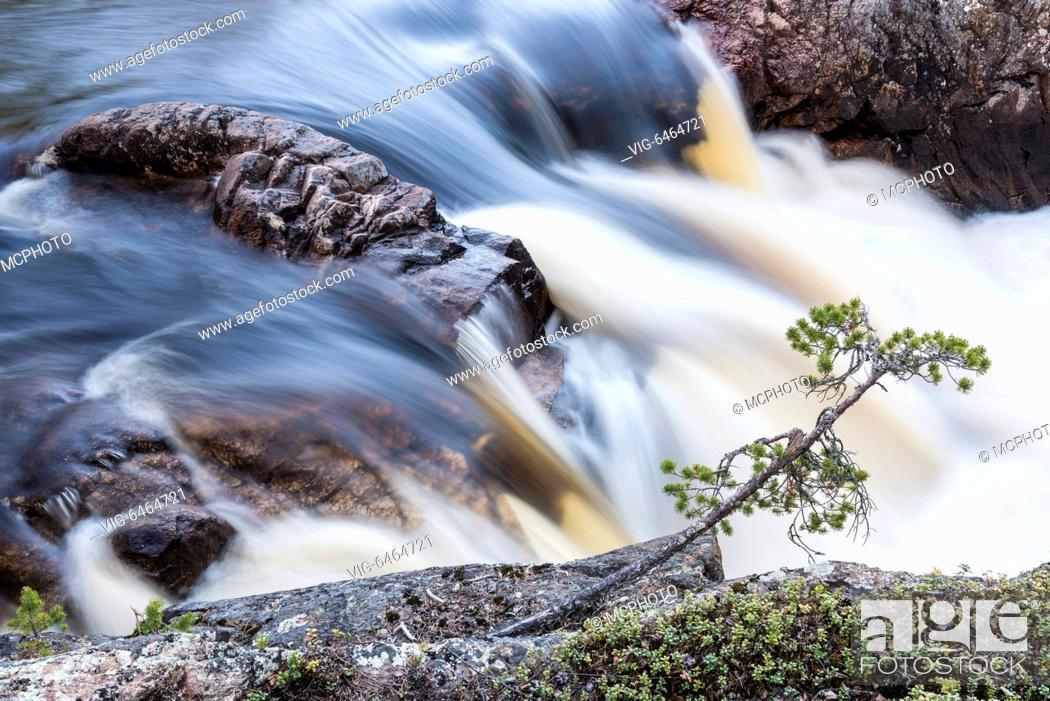 Stock Photo: Stromschnelle, Muddus Nationalpark, Welterbe Laponia, Lappland, Schweden, Juni 2015 - Schwedisch Lappland, , Scandinavia, 12/06/2015.