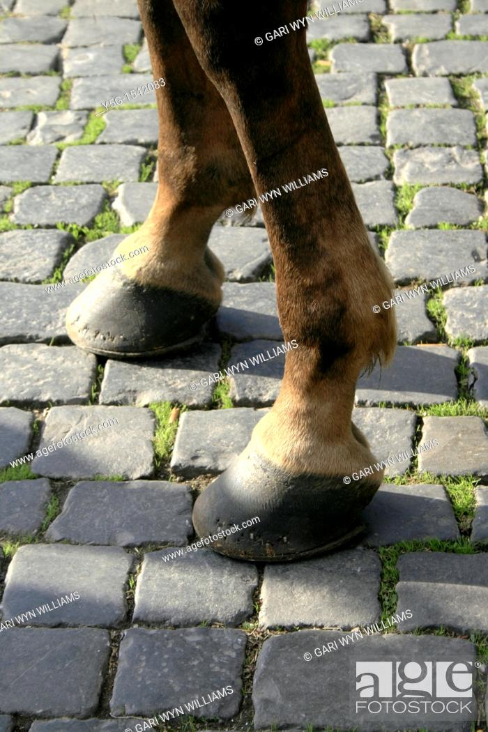 Stock Photo: one horse standing on cobbled street in sun.