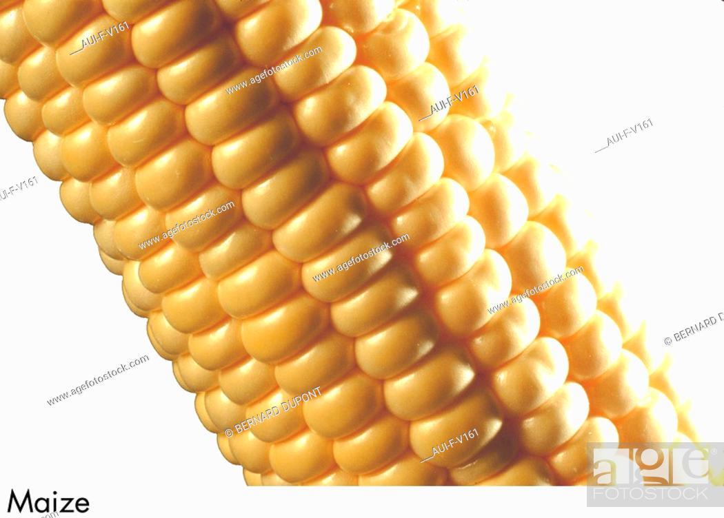 Stock Photo: Maize.