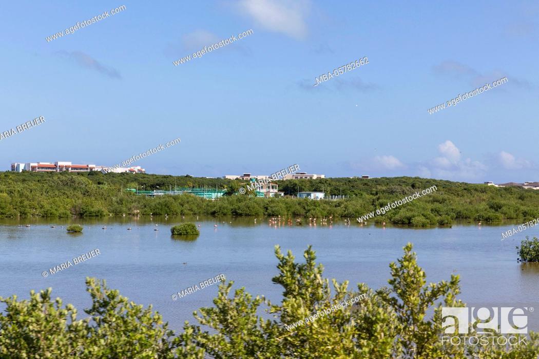 Stock Photo: natrual reserve, flamingos, mangrove trees, Cayo Santa Maria, Villa Clara, Cuba, the republic Cuba, the Greater Antilles, the Caribbean.
