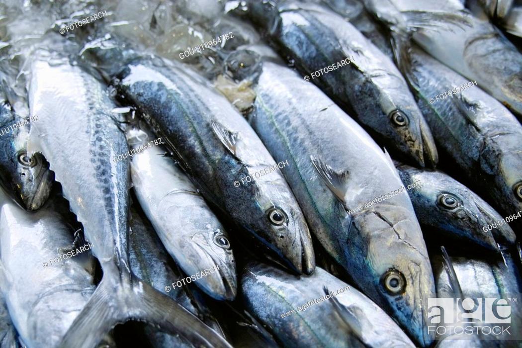 Stock Photo: Spanish mackerel.