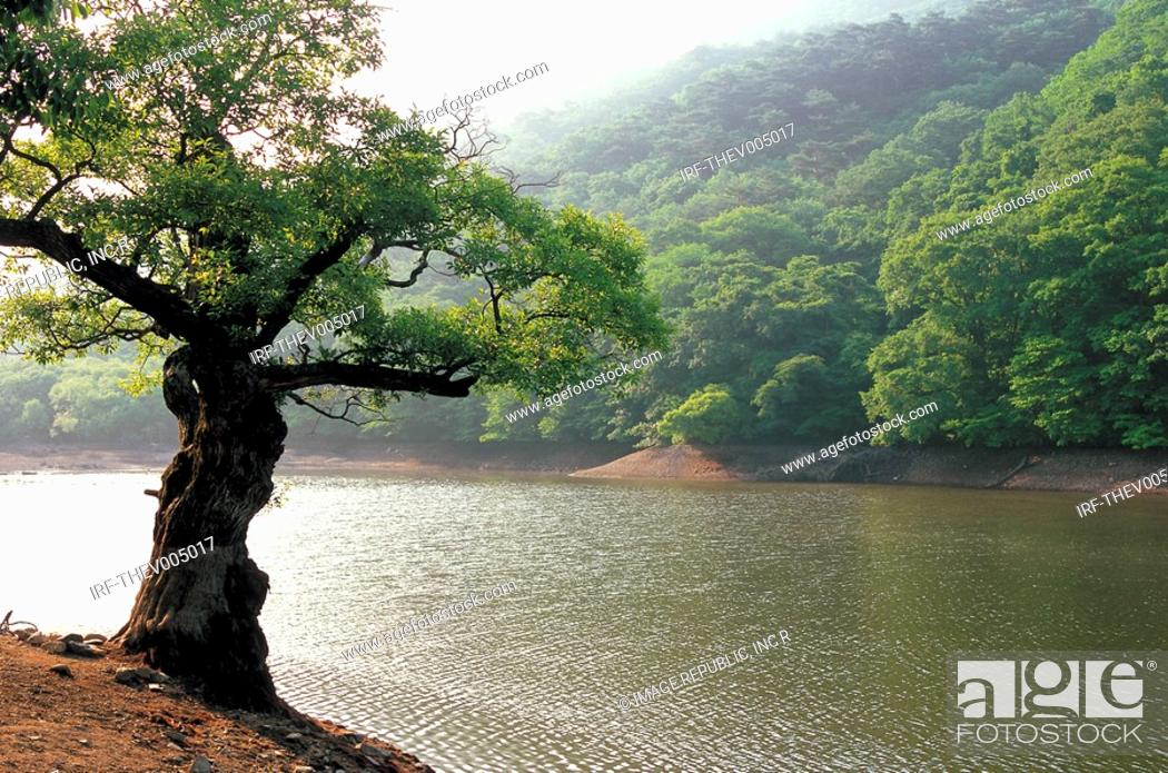 Stock Photo: tree by the river.