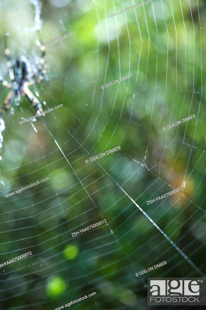 Stock Photo: Large spider web with spider waiting in center.