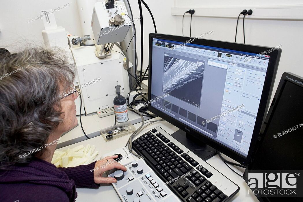 Stock Photo: France, Paris, National Museum of Natural History, Christine Rollard, araneologist, taking pictures of arachnids bristles with a Scanning Electron Microscopy.