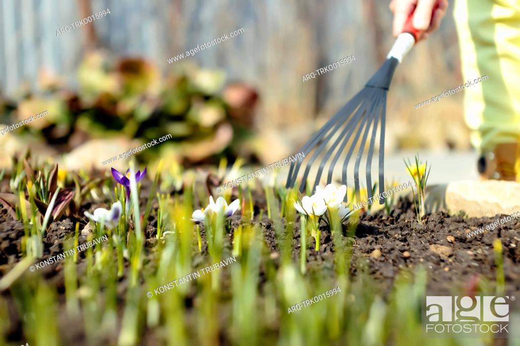 Stock Photo: Surface level shot of person raking in garden, Moscow, Russia.