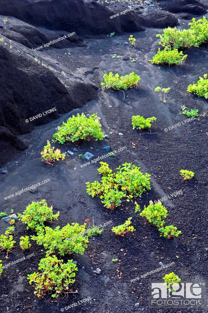 Stock Photo: El Hierro, Canary Islands  Geology  Black volcanic screes rock sand on slopes north of Lomo del Trebol near Sabinosa.