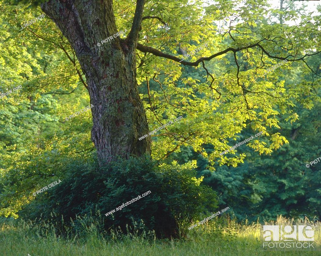 Stock Photo: Spring colors, Poland.