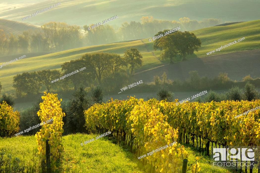 Stock Photo: Early morning view over vineyards and countryside of Val d'Orcia near San Quirico d'Orcia, Tuscany, Italy.