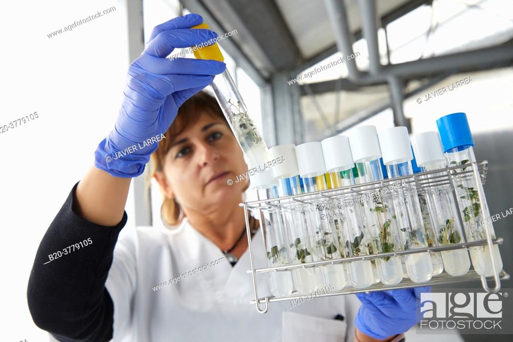 Stock Photo: In vitro culture, Plant Production and Protection, Biotechnology Laboratory, Institute for Agricultural Research and Development and the Natural Environment.