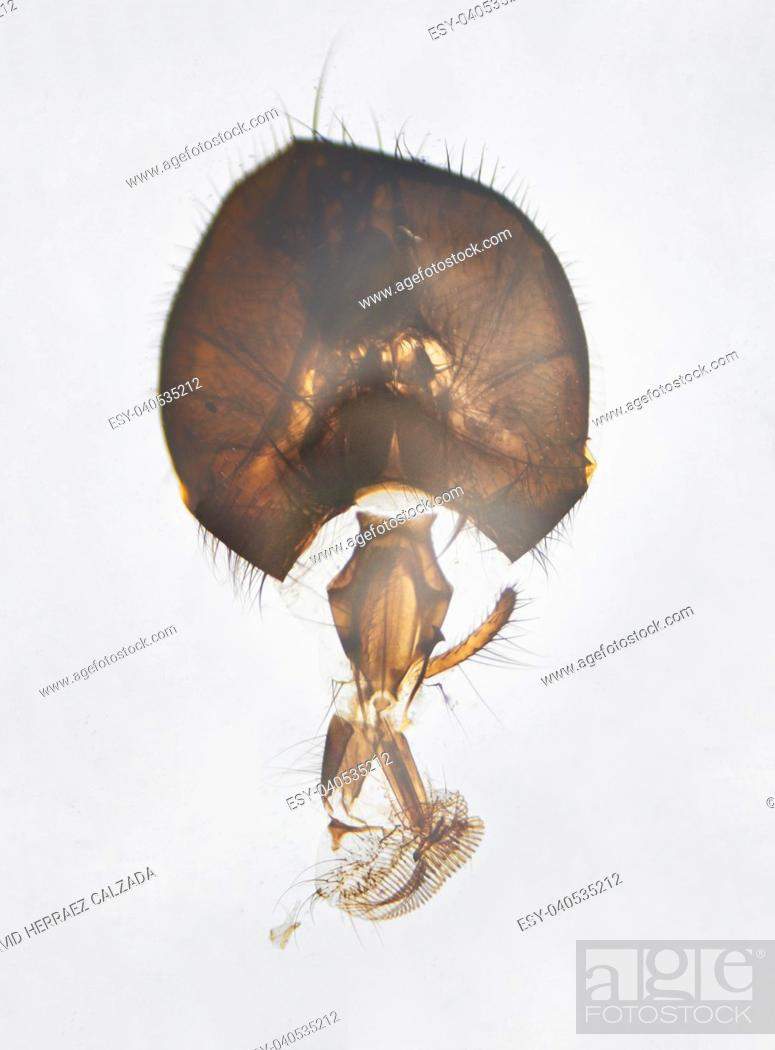 Stock Photo: Microscopic photography. House fly mouthpart and head.