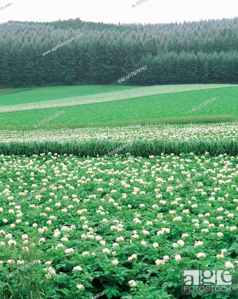 Stock Photo: plants, landscape, plant, cloud, sky, scenery.