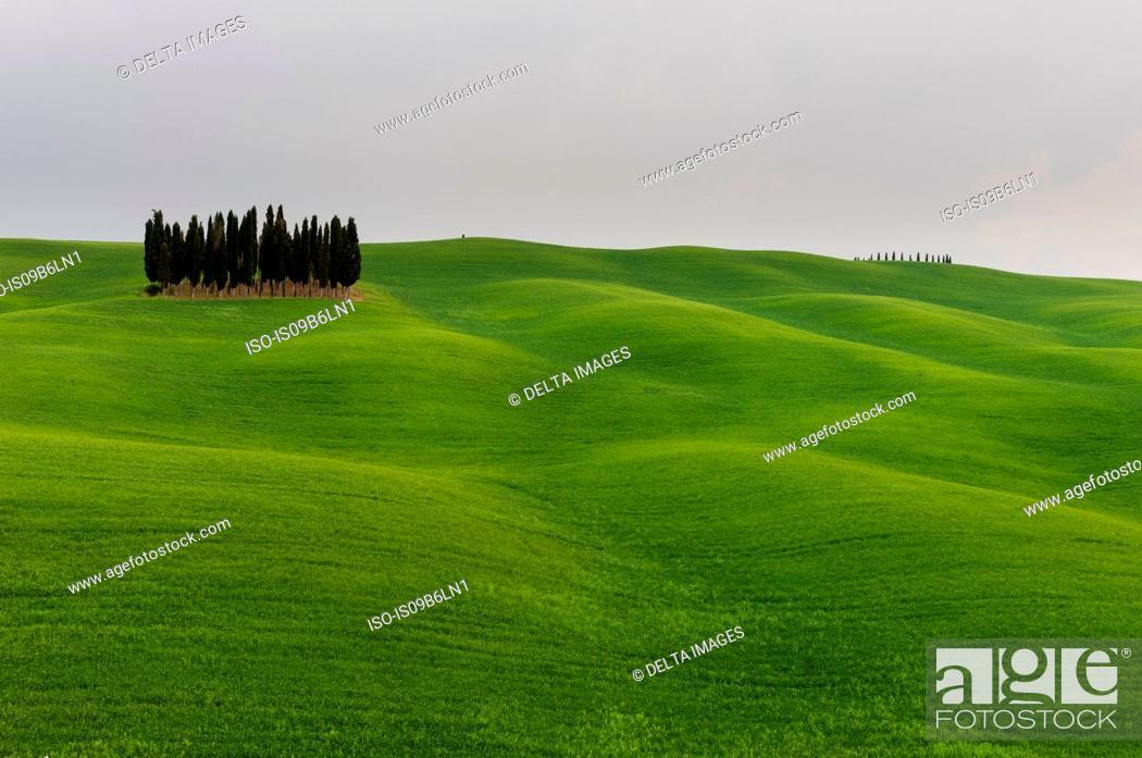 Photo de stock: Cypress trees near San Quirico d'Orcia, Val d'Orcia, Siena province, Tuscany, Italy.