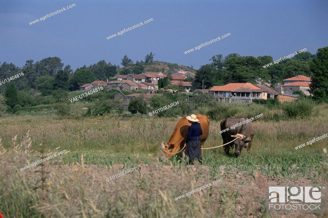 Stock Photo: Agricultural Work.