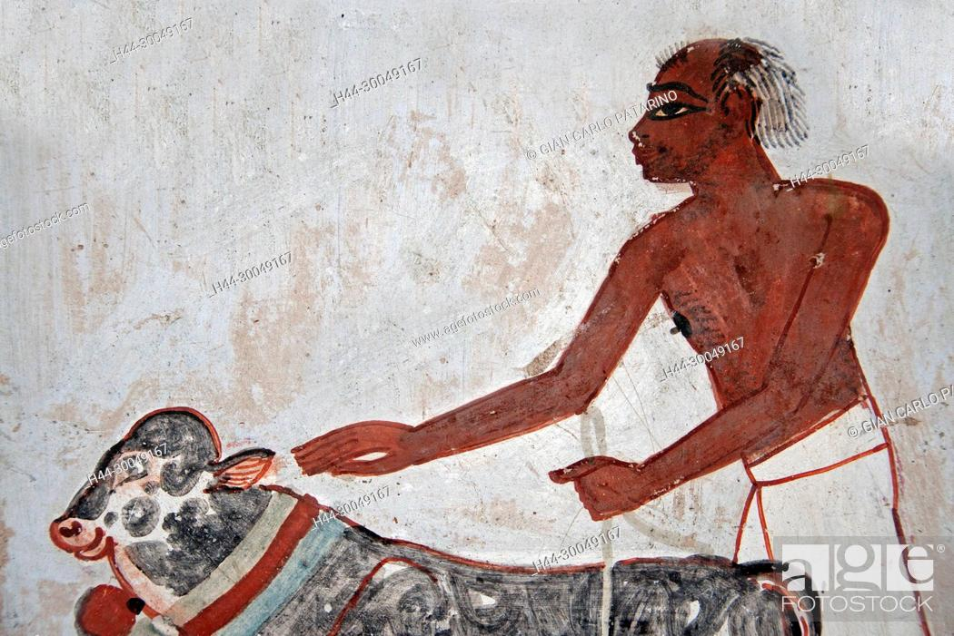 Stock Photo: Luxor, Egypt, tomb of Menna or Menena (TT69) in the Nobles Tombs (Sheikh Abd El-Qurna necropolis): beautiful scenes of life.