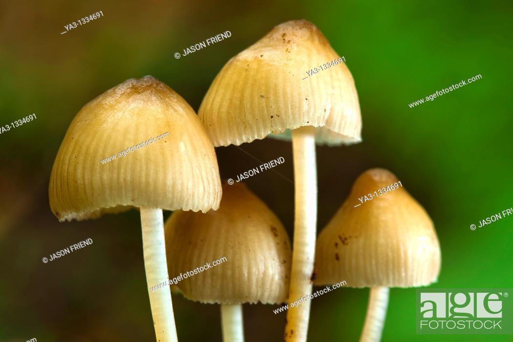 Stock Photo: England, Northumberland, Allen Banks & Staward Gorge Autumn shot of un-identified fungi, mushroom, toad stool.