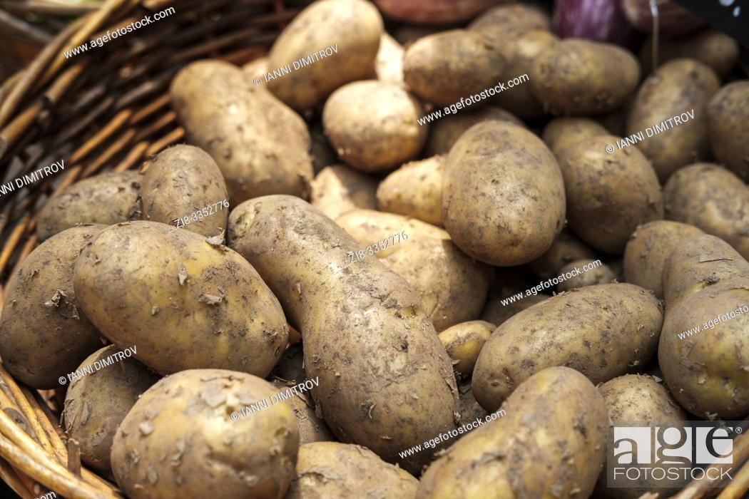 Stock Photo: Fresh organic potatoes-Solanum tuberosum.