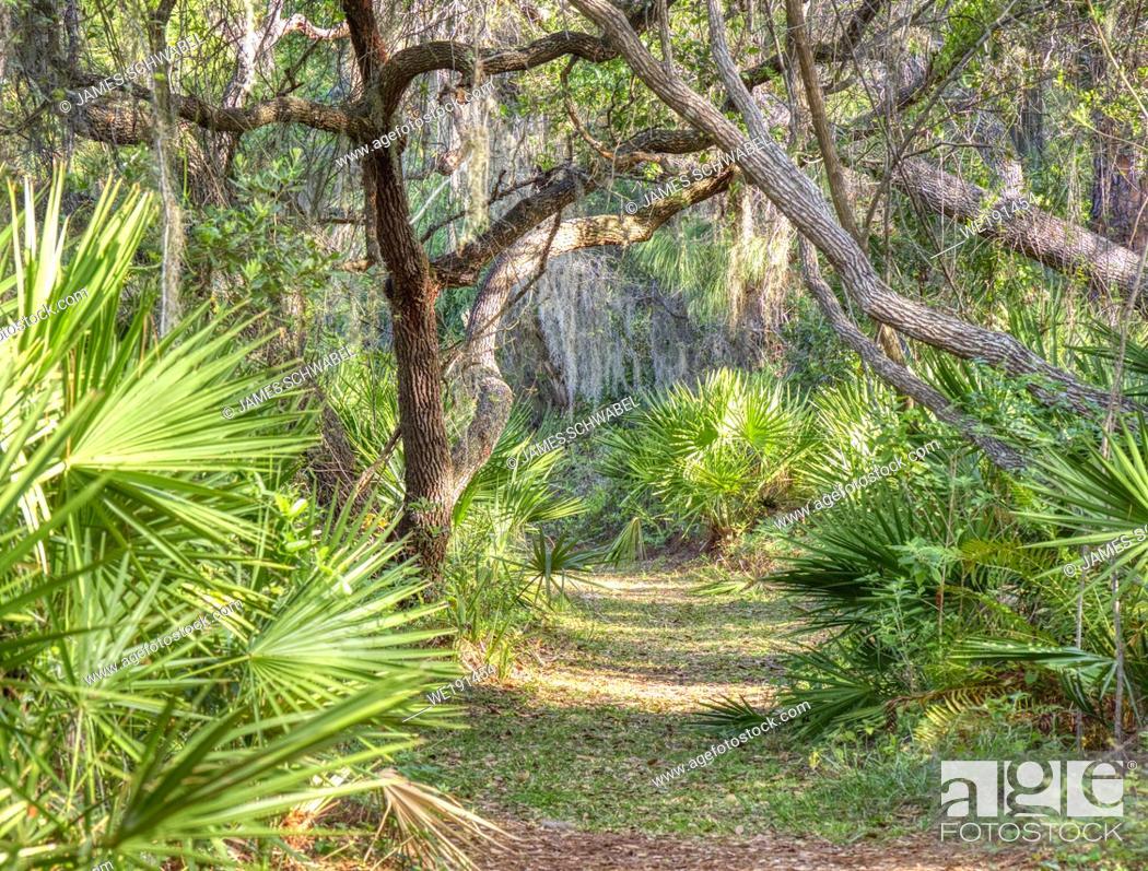 Imagen: Path in Oscar Scherer State Park in Southwest Florida in Osprey Florida.
