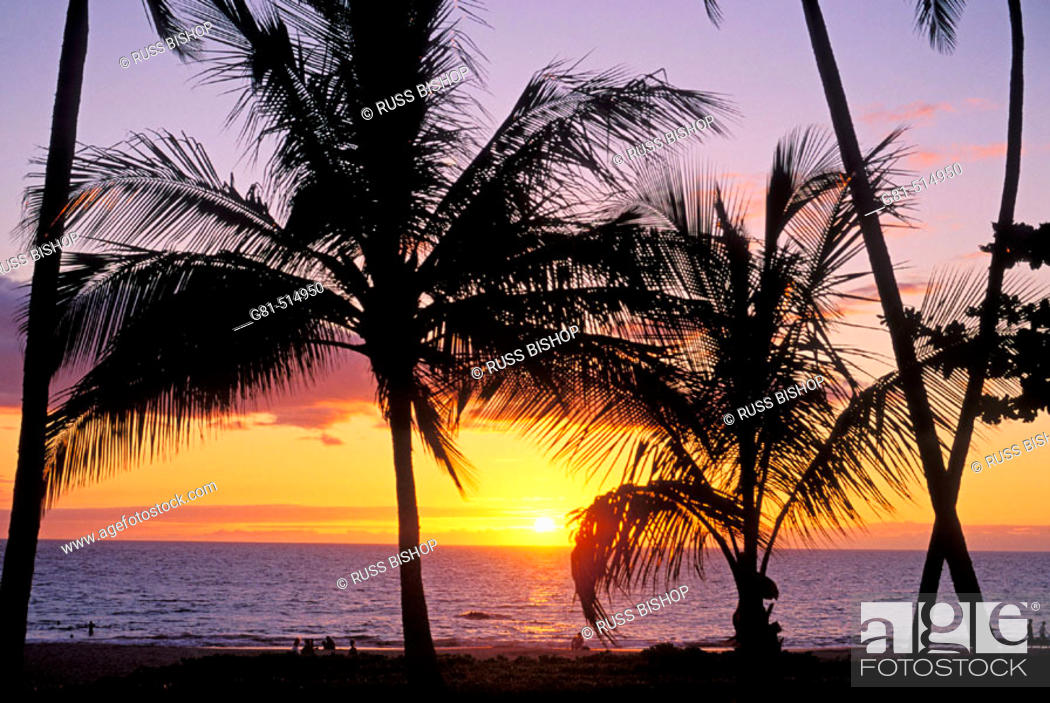 Sunset Through Silhouetted Palm Trees At Hapuna Beach