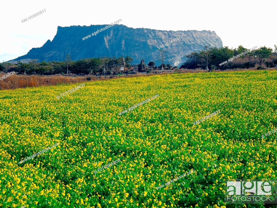 Stock Photo: halla, sky, hallamountain, mountain, field, scenery.