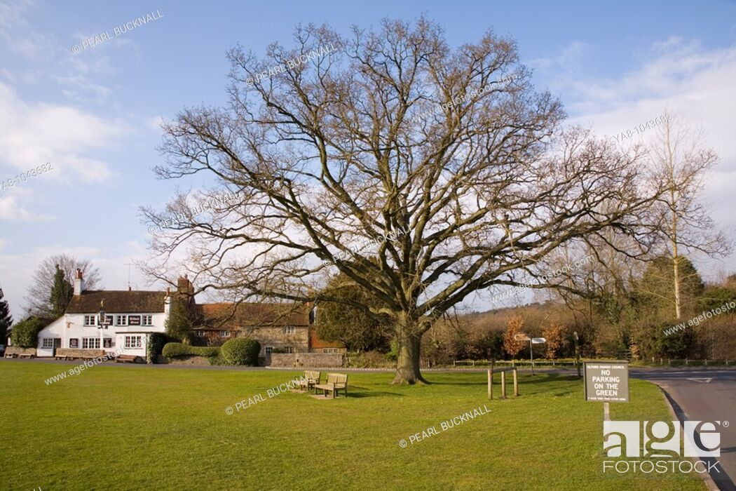 Stock Photo: Tilford Surrey England UK Europe  Village Green in spring with 'The Barley Mow' public house and old cottages beyond the Oak tree in picturesque old village.