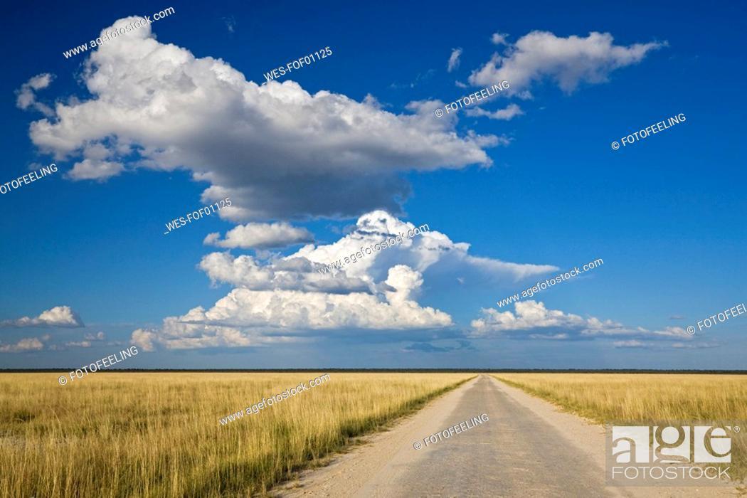Stock Photo: Africa, Namibia, Etosha National Park, Road.