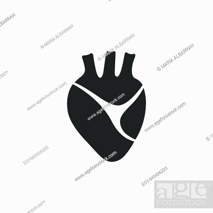 Vector: Human heart icon on a white background. Isolated vector illustration.