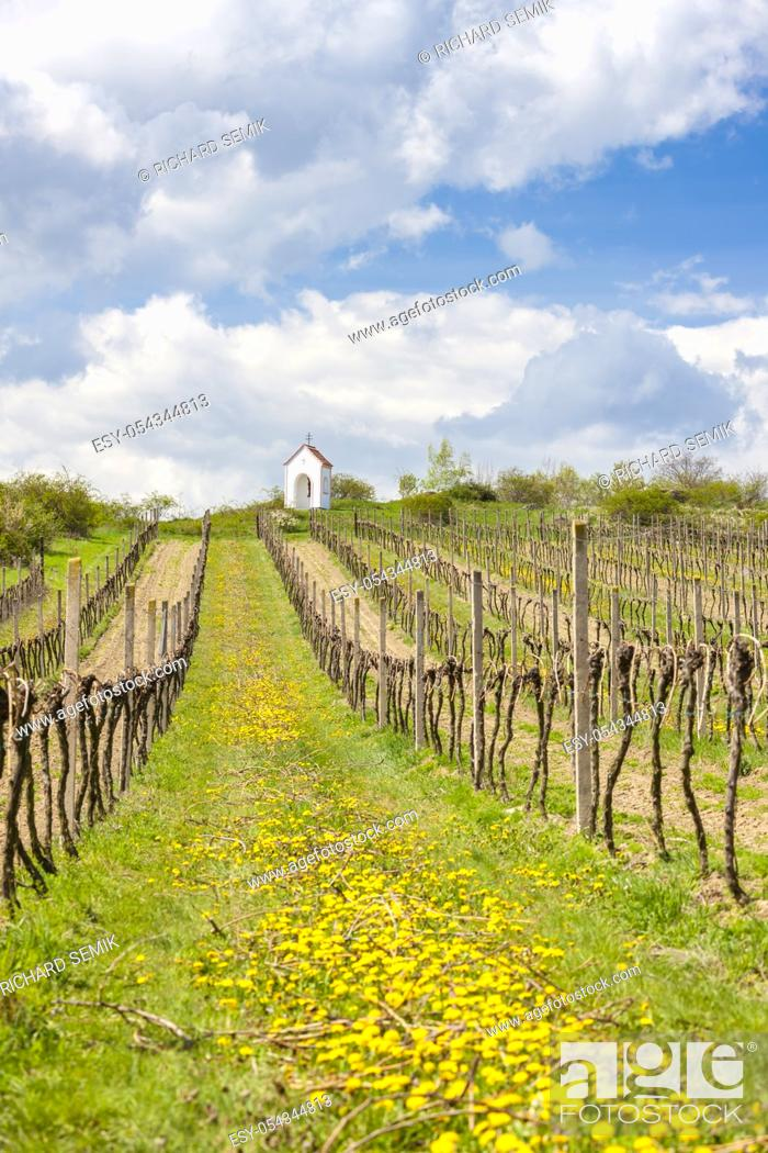 Stock Photo: vineyards near Hnanice, Znojmo region, Czech Republic.