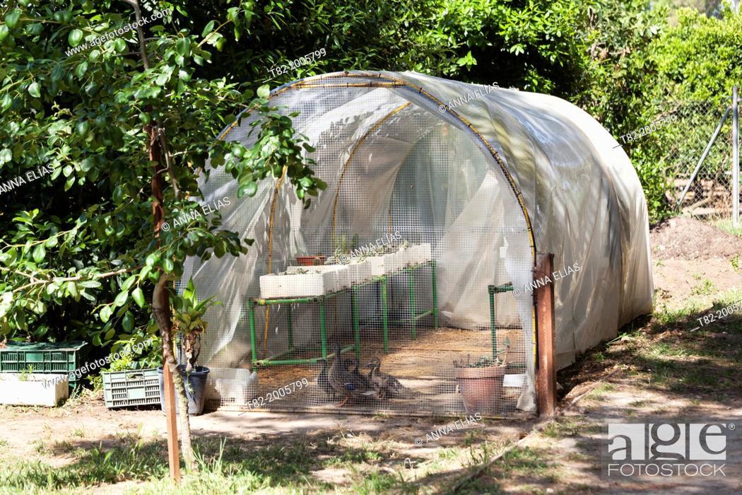 Stock Photo: home plastic greenhouse for seedlings and seeds, Jerez de la Frontera, Cadiz, Andalucia, Spain, Europe.