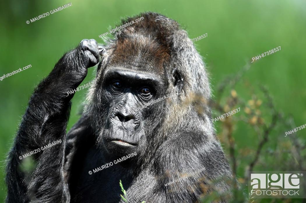 Gorilla dating sivusto dating baumritter huone kalut