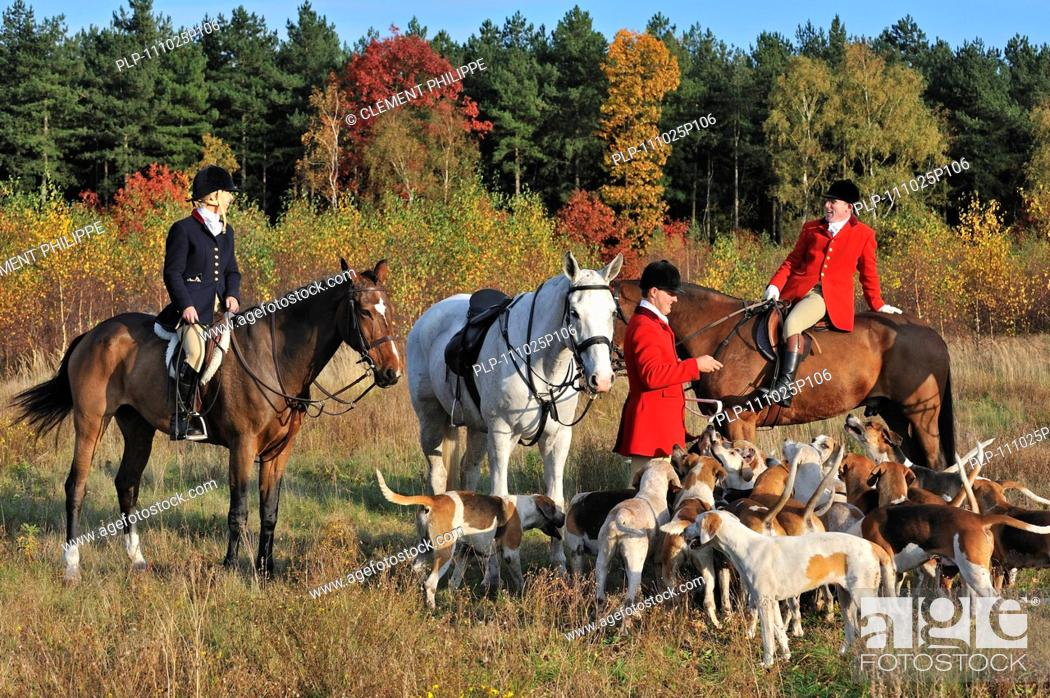 Stock Photo: Hunters on horseback with pack of hounds during drag hunting, Belgium.